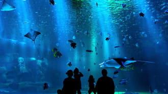 生き物たちに癒される!大阪の動物園・水族館5選