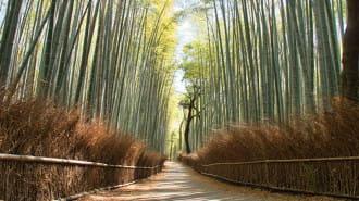 【京都】嵐山・嵯峨に行ったら合わせて寄りたい!おすすめの観光名所7選