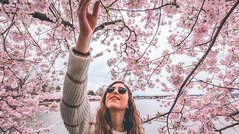 桜の季節に行きたい!広島市のおすすめ桜の名所10選