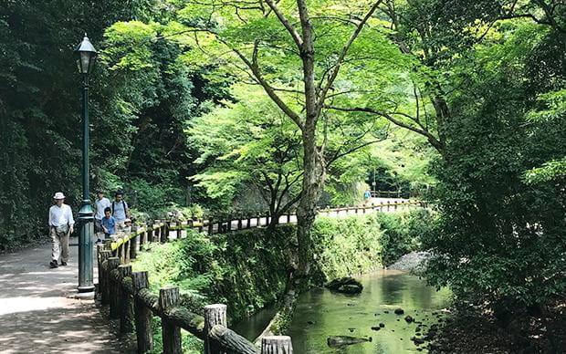 大阪 紅葉ロードハイキングと足湯