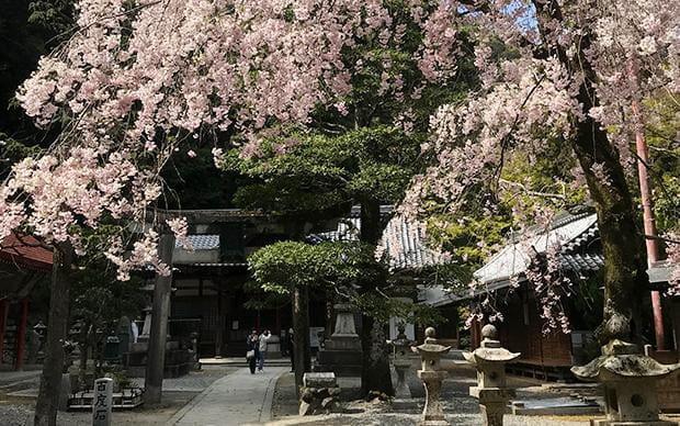 Osaka Maple Road Hike & Foot Spa