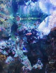 Echizen Matsushima Aquarium
