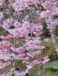 大本山 石山寺