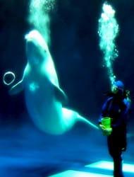 Shimane Aquarium Aquas